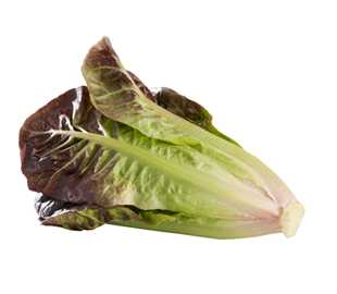 Lettuce-Cos-Red